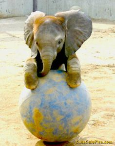 I got the whole world in my hands...baby elephant