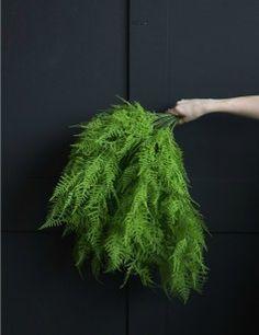 Abigail Ahern Asparagus Fern Bush