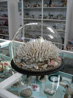 <3 what could be better . Shells, corals, cabinets, domes, white & aqua... One of my favourite places. Glandford Shell Museum.