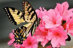 Amo as borboletas