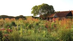 the Gardens of Piet Oudolf