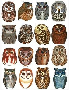 little owl tattoo ideas