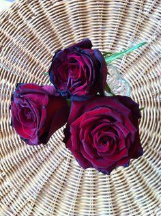 Růže k svátku 24.5.2015