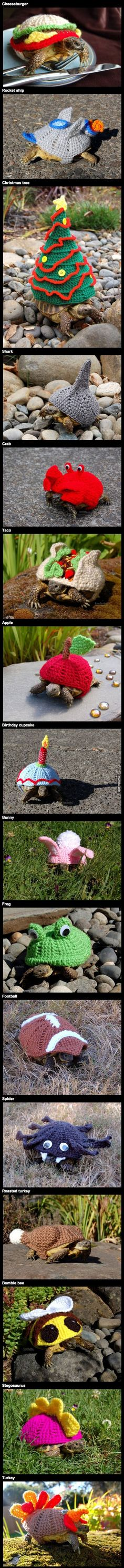 Tortoises sporting a variety of magnificent crocheted cozies, from cheeseburgers to dinosaurs