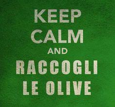 "Keep calm and raccogli le olive - ""Keep calm and harvest the olives"". LOL"