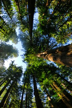 loose lips sink ships is part of Redwood forest - ashlyn twentyone canadian free spirit stress ball nature lover mindless dreamer nursing Beautiful World, Beautiful Places, Image Nature, Redwood Forest, Form Design, Tree Forest, Foto Pose, Oh The Places You'll Go, Amazing Nature