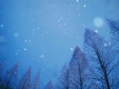 Photo:E-P1+M.ZUIKO DIGITAL 14-42mm F3.5-5.6ⅡR+FCON-P01  今日は名古屋で初雪でした。…