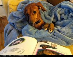 Story Time • from APlaceToLoveDogs.com • dog dogs puppy puppies cute doggy doggies adorable funny fun silly photography