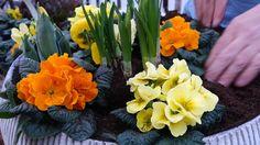 Lege planten en bloempotten in je tuin? Vullen!