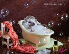 Elena Eremina is a Russian photographer who has a knack for capturing the adorableness of animals. Hedgehogs are a frequent subject for her, and these are just a few of the fun scenes she's captured them in. Follow her on Facebookfor more. [via designtaxi] More