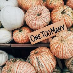 ♚ Bella Montreal ♚ Insta: bella.montreal || Pinterest & WeHeartIt: bella4549 || pumpkin display, one too many