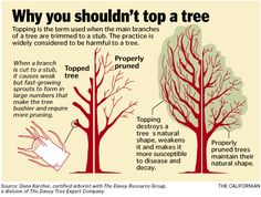 Hey, pruners, leave those trees alone! Deciduous Trees, Trees And Shrubs, Pruning Fruit Trees, Tree Pruning, Sustainable Farming, Single Tree, Tree Care, Tree Tops, Plant Care