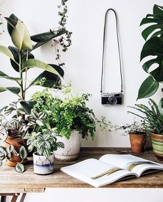A little bit of midweek green inspiration thanks to our ever growing plant gang. Have a good Wednesday all. Potted Plants, Indoor Plants, Plante Carnivore, Cactus Plante, Deco Nature, Ficus, Decoration Plante, Room With Plants, Boho Home