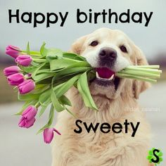 My Second Favorite Happy Birthday Meme Happy Birthday Dog, Happy Birthday Flower, Happy Birthday Quotes, Happy Birthday Images, Birthday Messages, Birthday Pictures, Happy Birthday Cards, Birthday Greetings, Dog Birthday Wishes