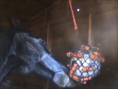 DIY Horse Stall Toy | PetDIYs.com Diy Horse Toys, Toys For Horses, Horse Stalls, Horse Barns, Horse Treats, Homemade Toys, Horse Gear, Breyer Horses, My Animal