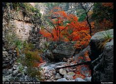 Fall colors near Devil's Hall in Guadalupe Mountains NP, Texas