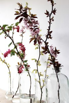 Botanical Stems in single vessels