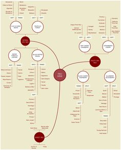 A mindmap containing the types of red wines.