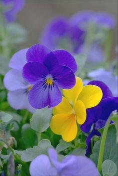 'blau und gelb' von lisa-glueck bei artflakes.com als Poster oder Kunstdruck $18.03