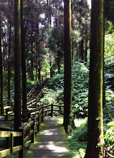 Alishan National Forest, Taiwan