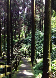 Alishan National Forest, Taiwan