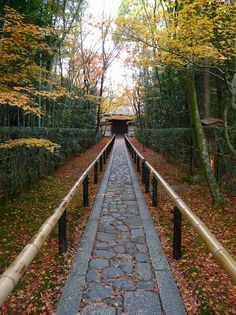 高桐院:石畳の参道