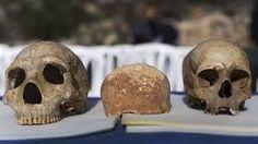 Résultats de recherche d'images pour «crane neanderthal vs homo sapien…