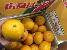 青果物の流通  ソーシャルメディアアグリ「地場活性化」のために: 原産地は広島県因島