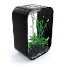 Not really a gadget, but ultra cool aquarium. The 60 litre is miiiiiiiiiiiine