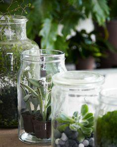 nieuw groen in huis: kamerplanten in glazen weckpotten. Productie: Nicoline Olsen en Fillipa Asved. Fotografie: VKStock