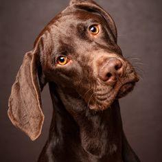 Duktig hund