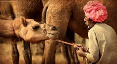 It's more than just a camel fair.... #pushkar #pushkarfair #streetphotography #rajasthan #travelphotography #travellust #traveler #photography #photos #incredibleindia #india #indialove #travellovers #travellove #travelgram #photooftheday