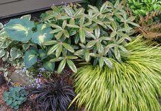 Brunnera 'Hadspen Cream', Hosta 'Dream Queen', Rhododendron 'Teddy Bear', Hakonechloa 'Aureola', Ophiopogon 'Nigrescens', Hosta 'Blue Mouse Ears'