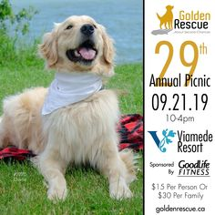 Golden Anniversary, 30th Anniversary, Golden Events, Rescue Dogs, Life Is Good, Picnic, The Incredibles, Volunteers, 30 Years