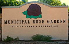 The Rose Garden is in Memorial Park in El Paso.  During the rose season, it is well worth the drive to this beautiful garden.