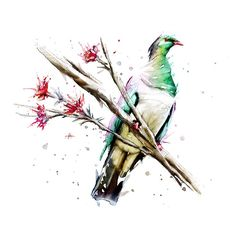 NZ Native Birds on Behance Watercolor Animals, Watercolor And Ink, Tattoo Watercolor, Bird Sketch, Nz Art, First Art, Limited Edition Prints, Art Sketchbook, Sell Your Art