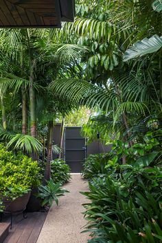 Ein tropischer Garten im Herzen von Melbourne Behind a steel black gate lies an unexpected tropical garden in the heart of Melbourne. Lush palm tree canopies flank the garden path Balinese Garden, Bali Garden, Garden Paths, Tree Garden, House With Garden, Forest Garden, Lush Garden, Water Garden, Shade Garden