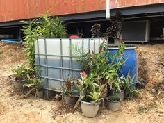 Our Grey Water System – Recycle, Reuse & Grow Trees