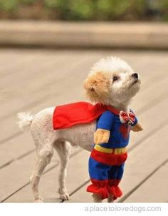 super dog LOVE IT