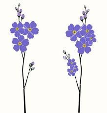 Image result for forget me nots drawing