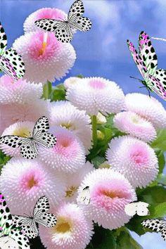 Beautiful Flowers Pictures, Flower Pictures, Beautiful Butterflies, Amazing Flowers, Rose Flower Wallpaper, Flowers Gif, Love Flowers, Beautiful Nature Scenes, Beautiful Fantasy Art