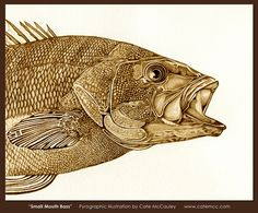 Small Mouth Bass burned on watercolor paper.