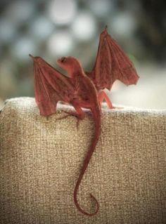 Tiny dragon                                                       …