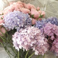 Hydrangea are one of my very favorite flowers. No matter the color, they are simple, beautiful, and are perfect in a bride's bouquet. My Flower, Beautiful Flowers, Romantic Flowers, Flower Ideas, Vintage Flowers, Simply Beautiful, Vintage Floral, Hortensia Hydrangea, Purple Hydrangeas