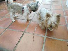 Ratos en casa 08/16 Benji, Gala, Richie, George, Ginger, Odín y Thais 08/16