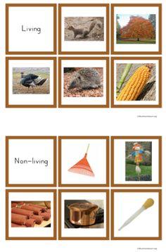 Autumn Theme Living & Non-Living Sort (from Trillium Montessori)