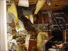 Fires often include other cleanup needs, including the removal of water and the drying of your furniture, walls and carpets. If your fire was extinguished with water.