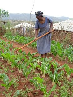 Supporting women farmers improves food security