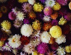 Marta Malheiro, Author at Revista Jardins - Página 4 de 5 Beginning Of Spring, Book Title, Bonsai, Fiction, Floral, Books, Plants, Reading, Language Of Flowers