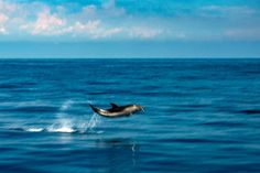 Jump & Splash - Move effect on newborn baby striped dolphin jumping outside the sea